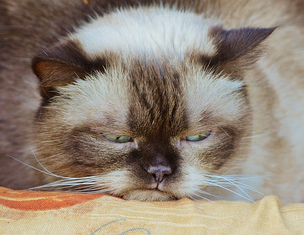 cat-1378203__340