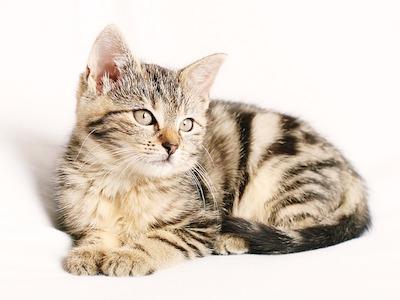 cat-1192026_640