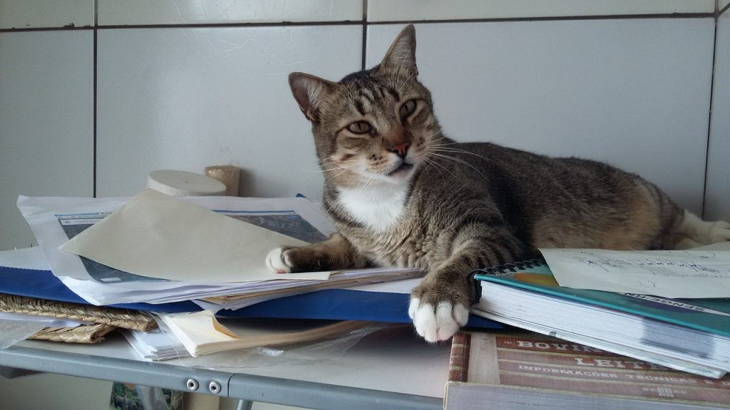 cat-1531804_1280