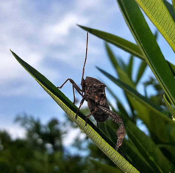 body_beetle