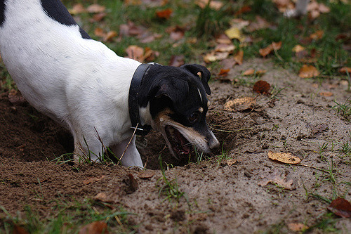 Diggings is FUN!Digging deeper/used under CC BY-SA 2.0.