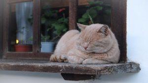 cat-1183573_640