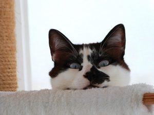 cat-1826788_640
