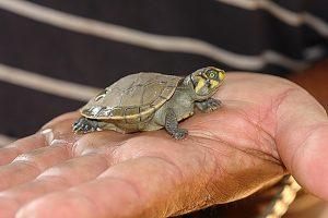 turtle-783713_640