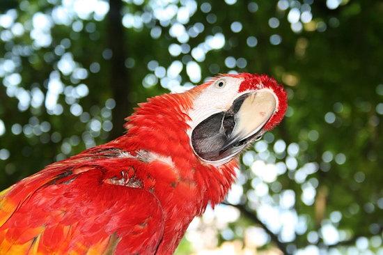 body_parrot