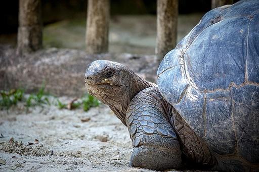 body_tortoise