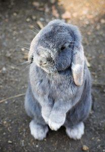 bunny-1276628_640