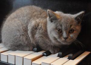 cat-1248012_640