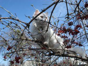 cat-320536_640