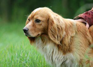 dog-1503210_640