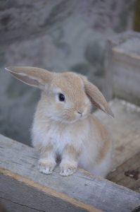 hare-1496490_640