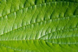leaf-1992_640