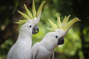 bird-616168_640