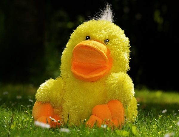 body_random_duck