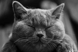 cat-1634369_640