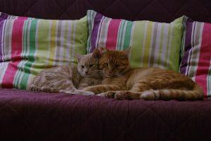 cat-1793100_640