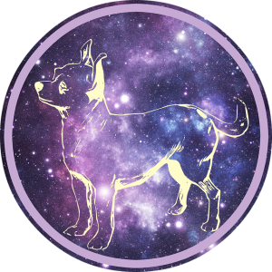 chihuahua-1539632_640