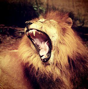 lion-1551761_640