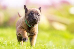 puppy-1726419_640