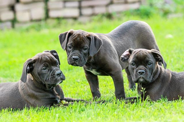 puppy-1785772_640
