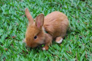 rabbit-1915918_640