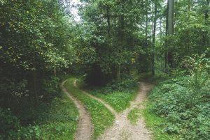 woods-768753_640