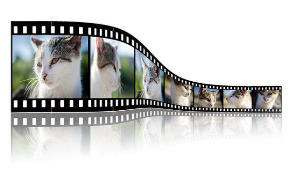 body_cat_film