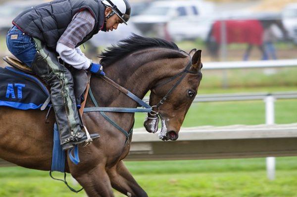 body_racehorse