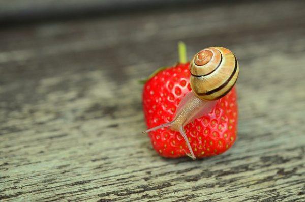 body_snail_pace