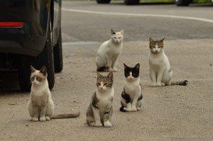 cat-1543541_640