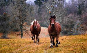 horses-1984977_640
