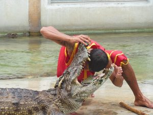the-crocodile-farm-1516548_640