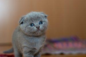 adorable-1845790_640