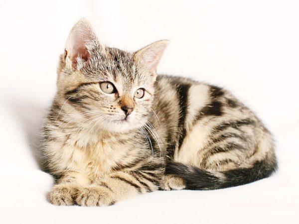 body_kitten