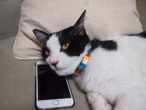 cat-1151533_640