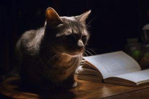 cat-1649955_640