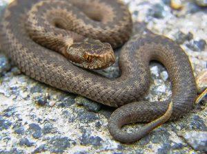 snake-947367_640