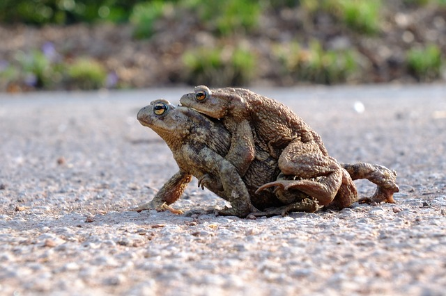 body_frog_riding_frog