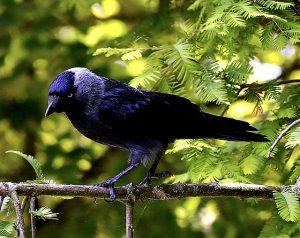 bird-2403738_640