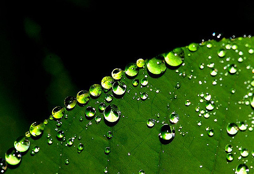 body_leaf_water_droplets