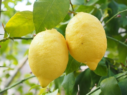 body_lemon